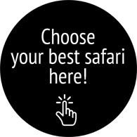 Find you perfect safari